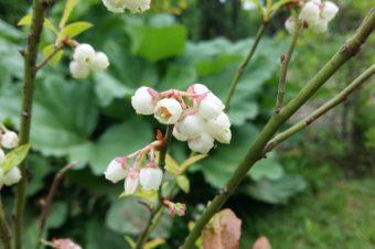 Zimna Zośka i trzej ogrodnicy – jak to z nimi jest?