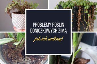 Problemy roślin doniczkowych zimą – jak ich uniknąć?