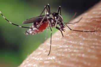 Jak odstraszyć owady