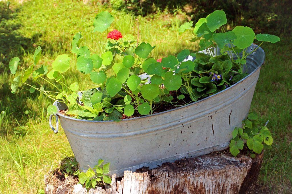 Warzywa W Pojemnikach Czas Roślin