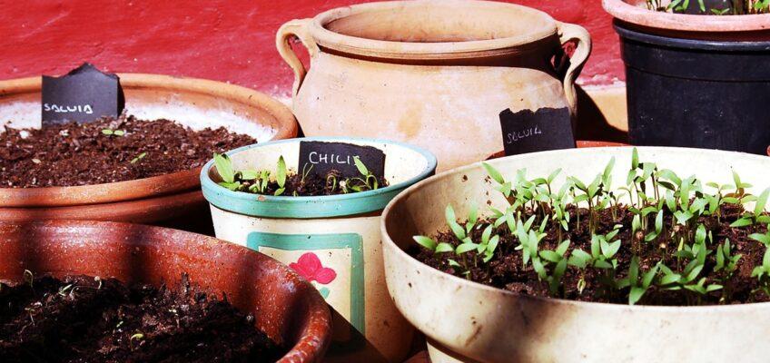 Warzywa w pojemnikach