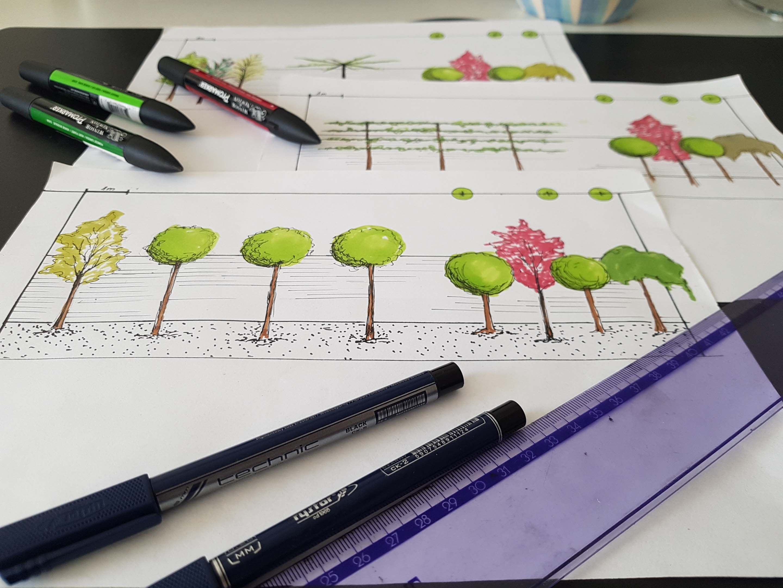 rysunek drzew