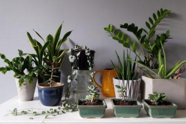 Rośliny doniczkowe łatwe w uprawie