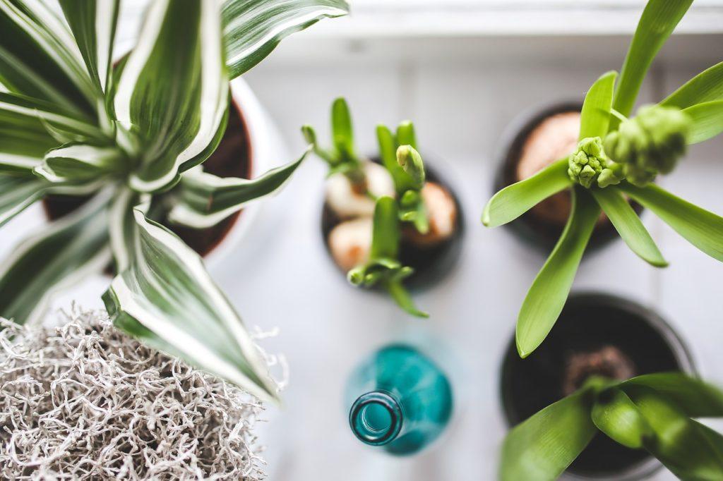 rośliny na parapecie