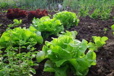 Warzywa łatwe w uprawie
