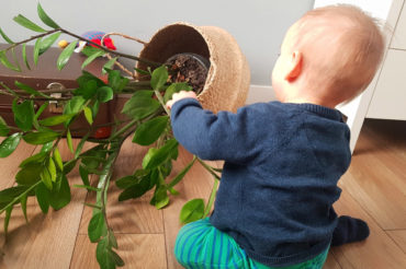 Rośliny doniczkowe niebezpieczne dla dzieci