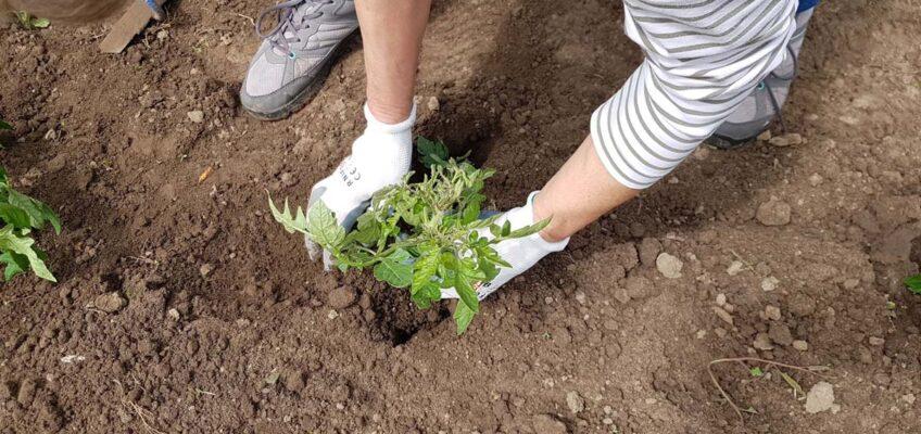 Kalendarz biodynamiczny – kiedy najlepiej siać i sadzić