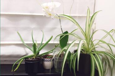 Jaką energię emitują rośliny pokojowe?